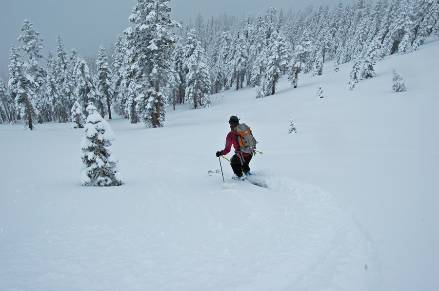 Jenn skis the big trees