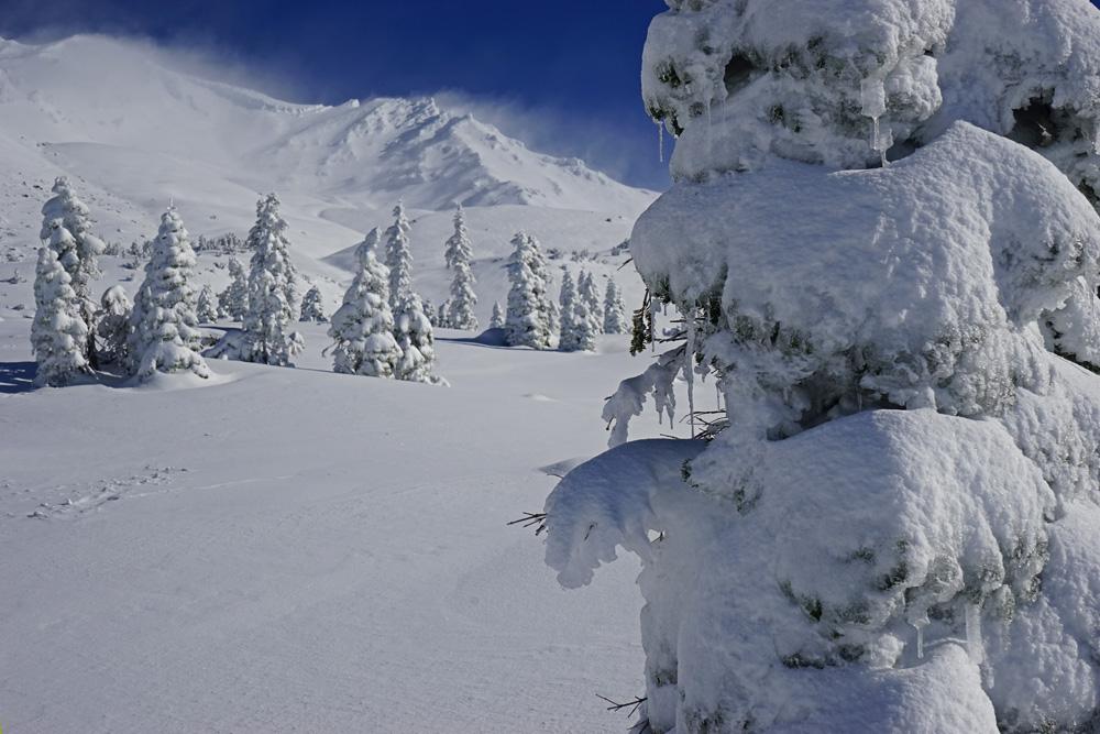 Mt. Shasta Avalanche Gulch 8,000'